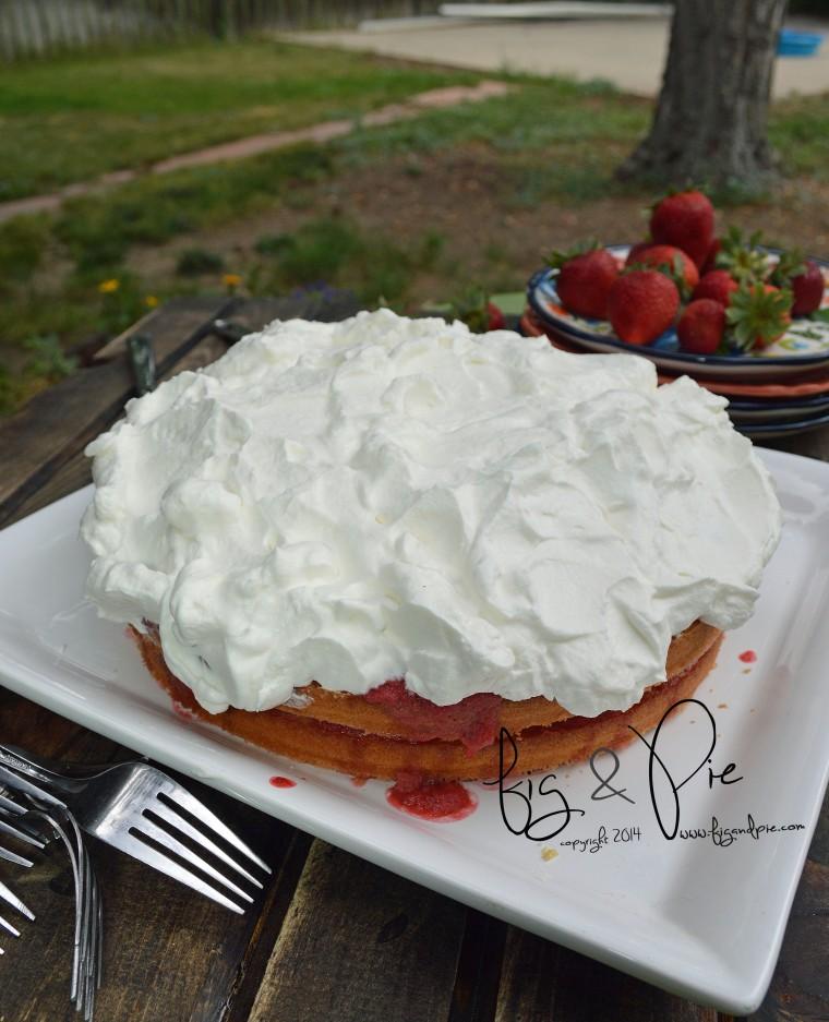 Sponge Cake with Strawberries & Rhubarb (9) WM